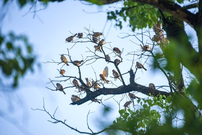 Bird banders devote themselves to study of migratory birds in E China's Jiangxi
