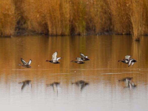 Migrant birds fly over Ulan Suhai Lake in Inner Mongolia