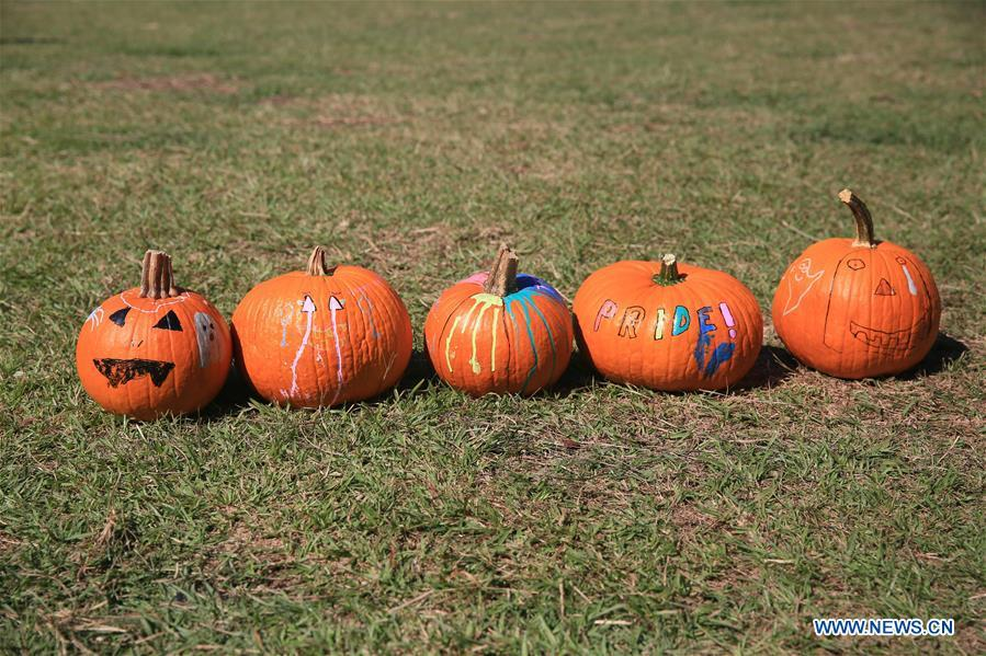 People come to pumpkin patch in New Orleans to have fun