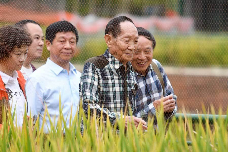 New hybrid rice generation produces record crop