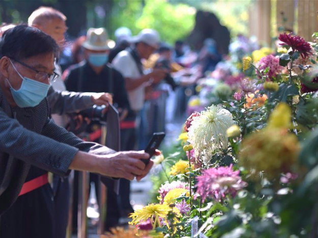 Chrysanthemum exhibition held at West Lake Park in Fuzhou