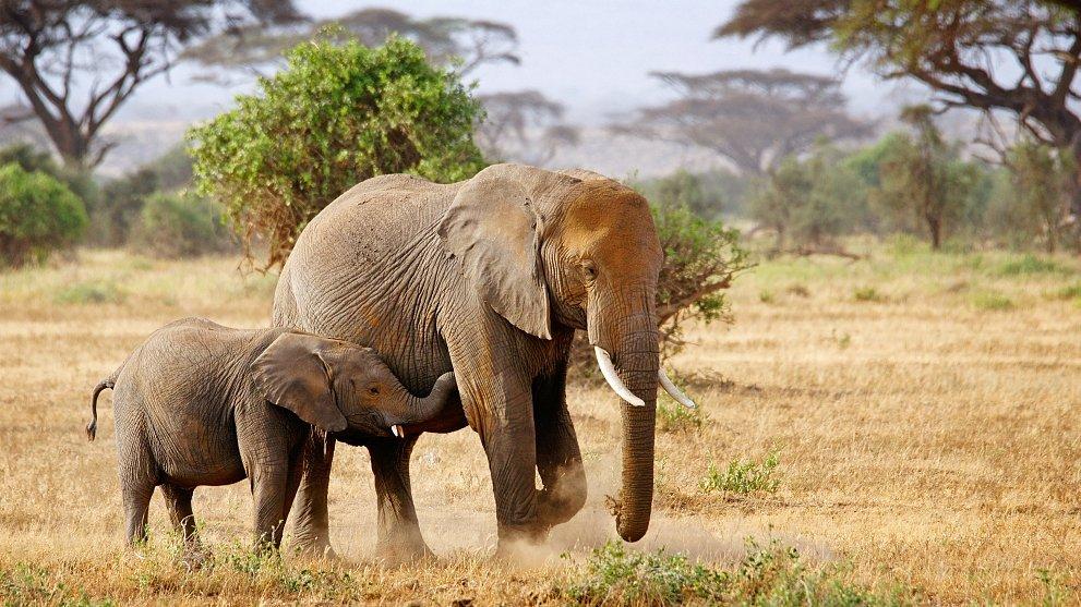Kenya's wildlife sanctuary gets more land