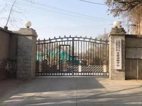 Over 6,600 test positive for brucellosis bacteria in Lanzhou