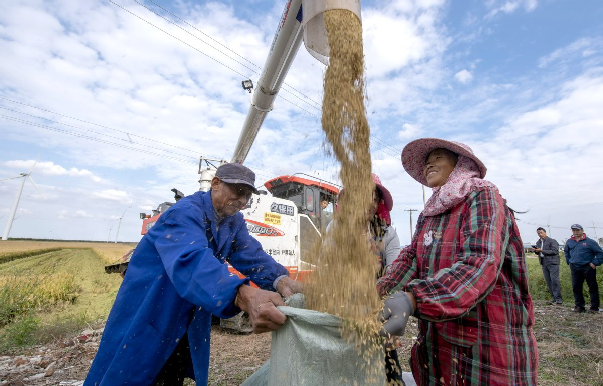 Over 21m metric tons of autumn grains purchased