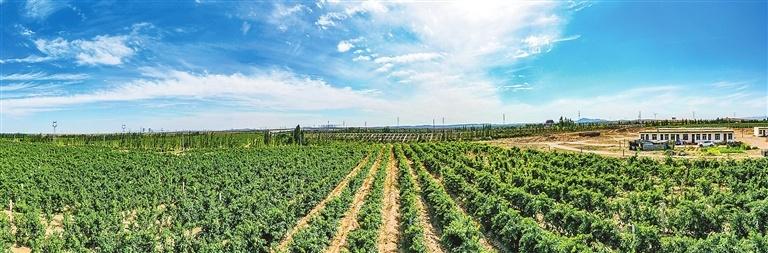 Ningxia plants seeds for wine tourism
