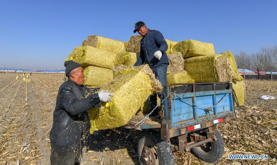 Jilin prioritizes comprehensive utilization of crop straws