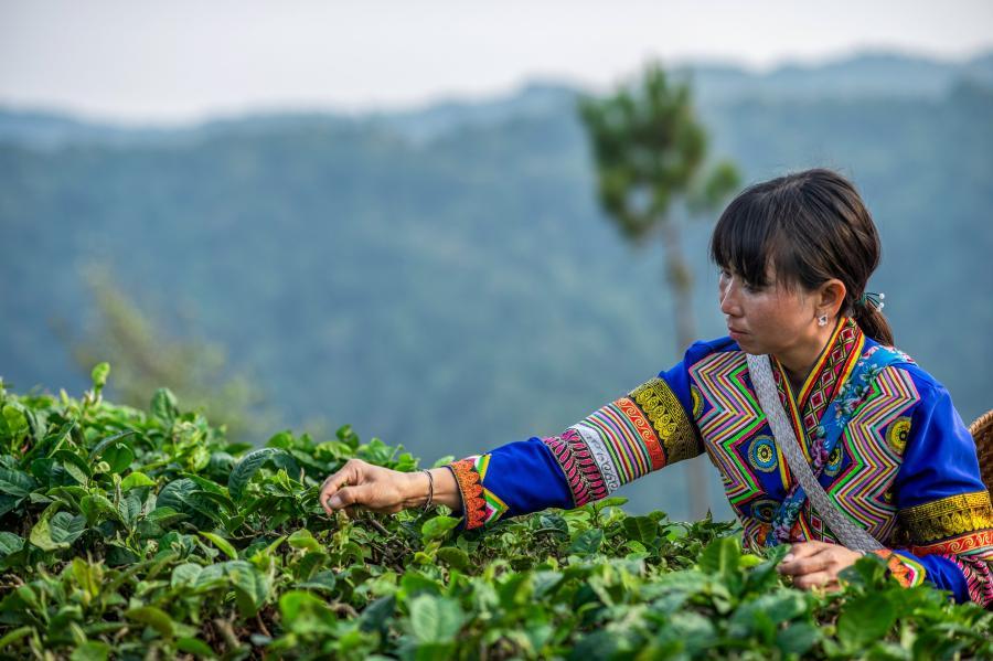 Yunnan, Xinjiang hit anti-poverty goals
