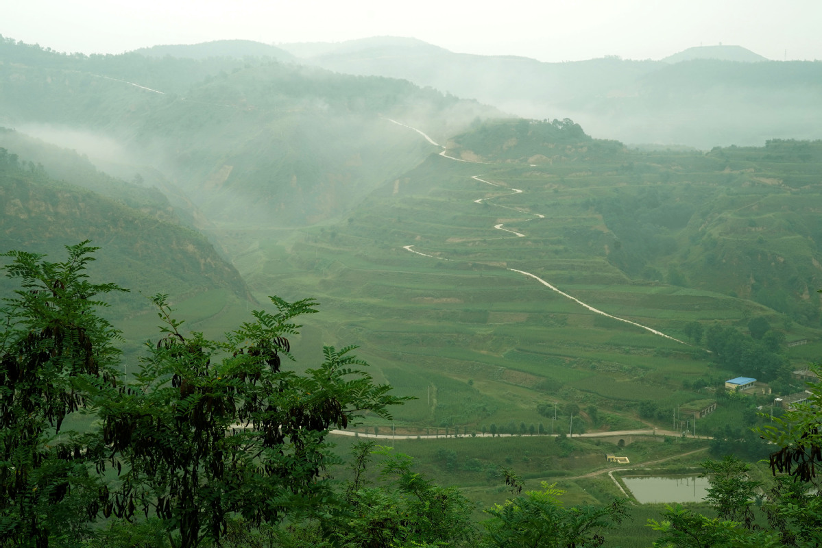 Chinese reforestation to cut global CO2