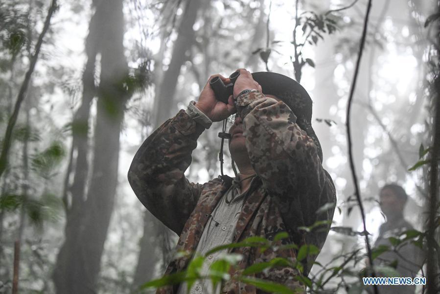 In pics: gibbon survey in Hainan