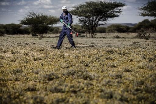 FAO lauds Kenya for fight against desert locusts