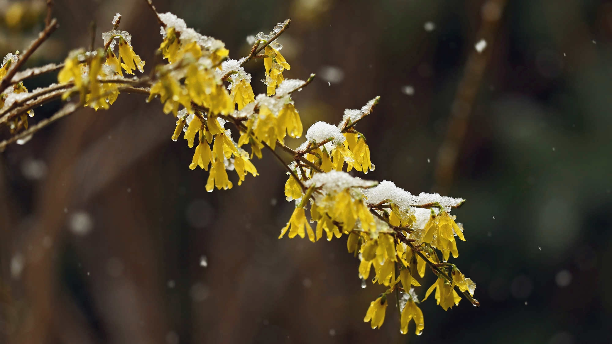 China issues orange alert for blizzards