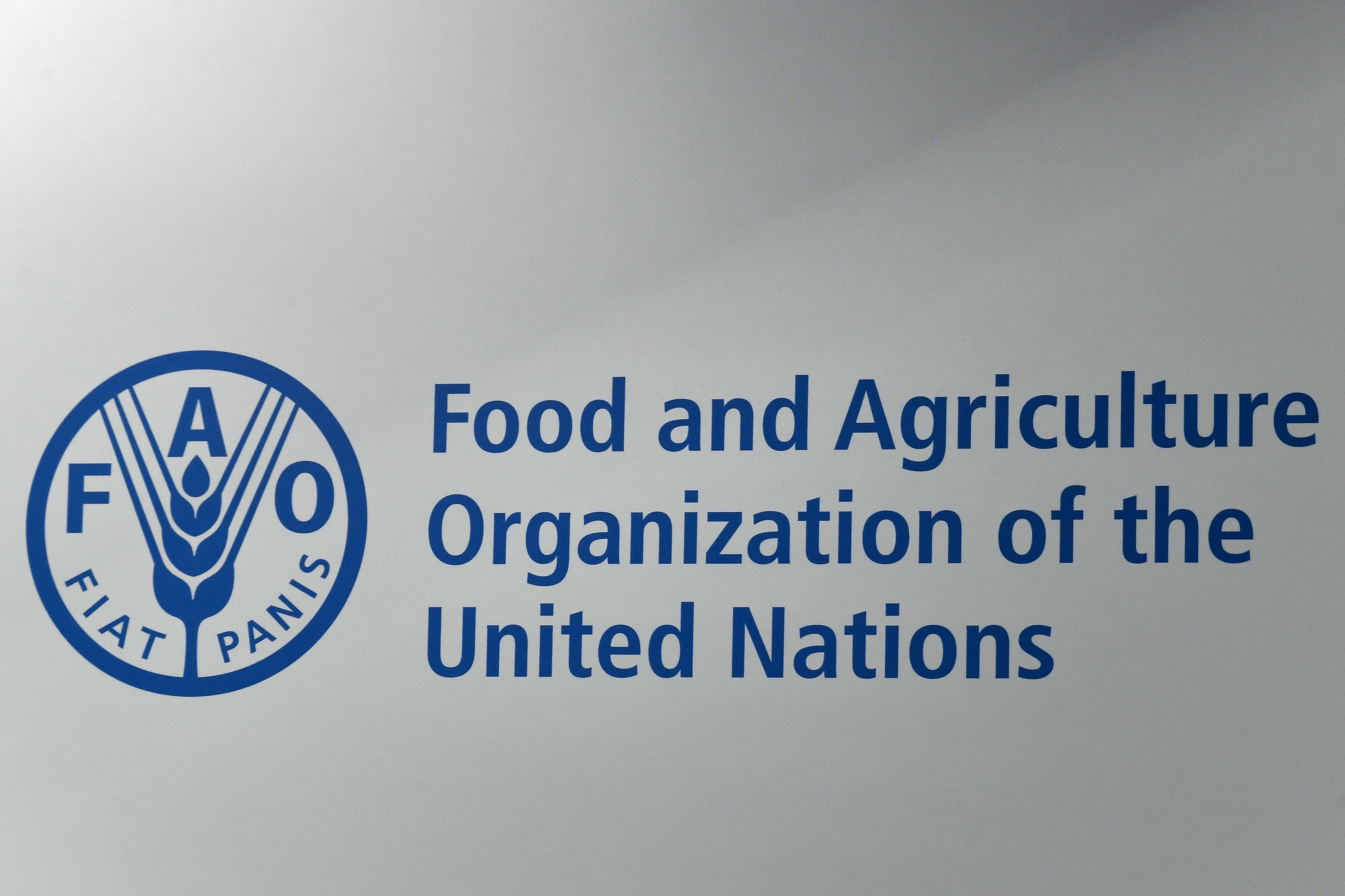 FAO calls for greater efforts to curb antimicrobial resistance