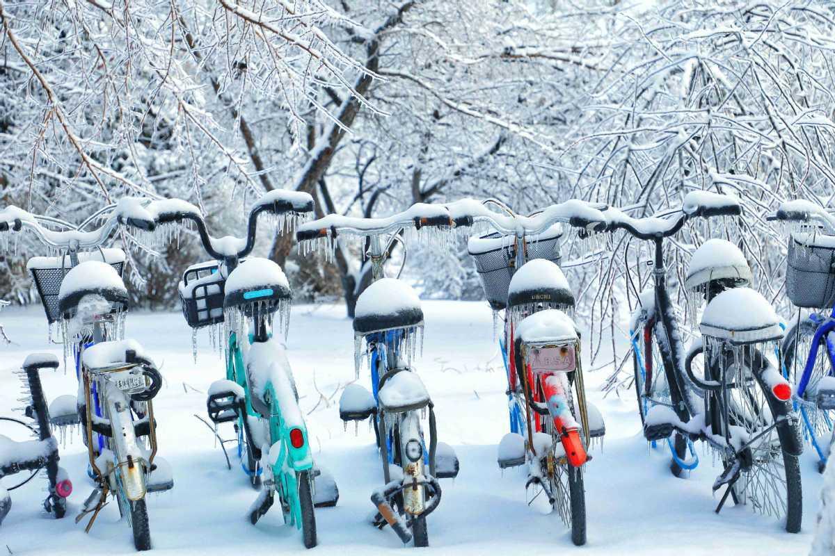 First snow in NE China university campus into winter wonderland