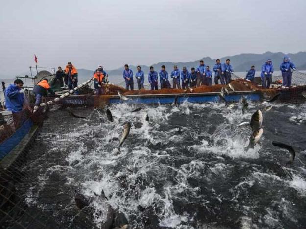 Fishery workers catch fish in Chun'an County, Zhejiang