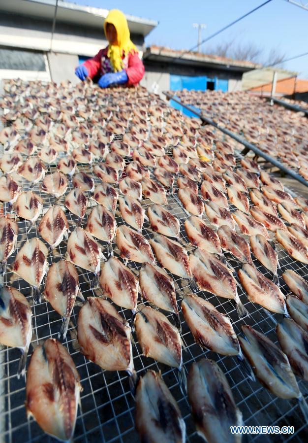 Fishermen dry fish in Duoshi Village of Qingdao, E China