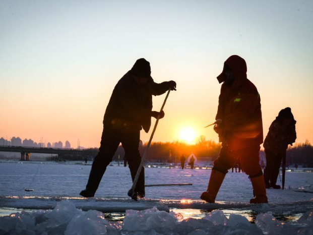 People collect ice from Songhua River in Harbin