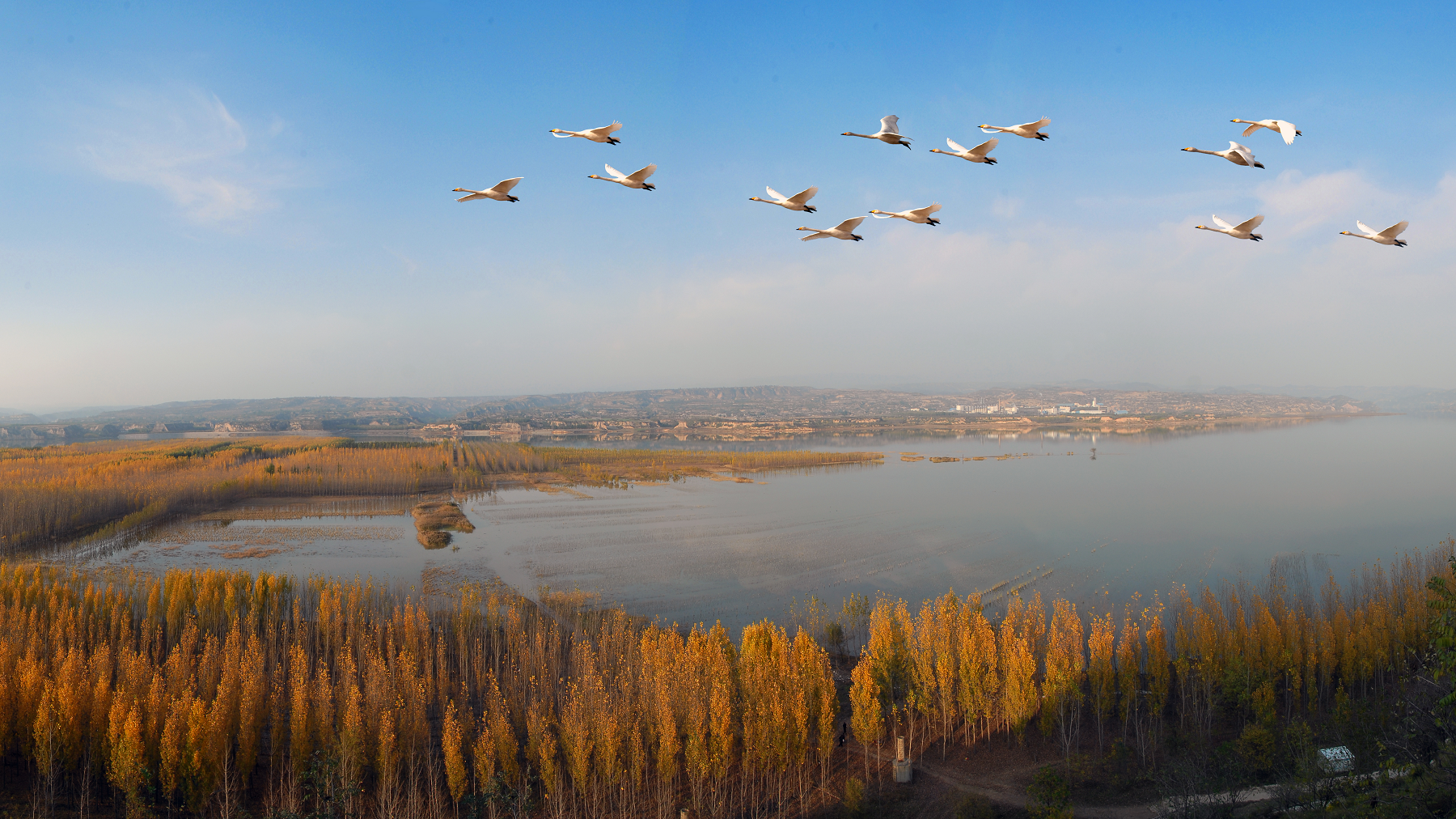 Yellow River Delta becomes paradise for wild birds