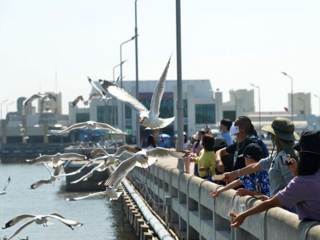 Tourists feed seagulls at Bang Pu Seaside Resort in Thailand