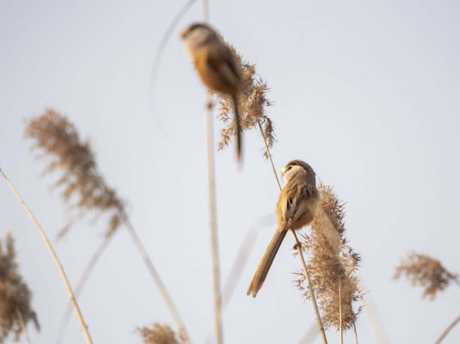 Endangered birds spotted in Beijing park