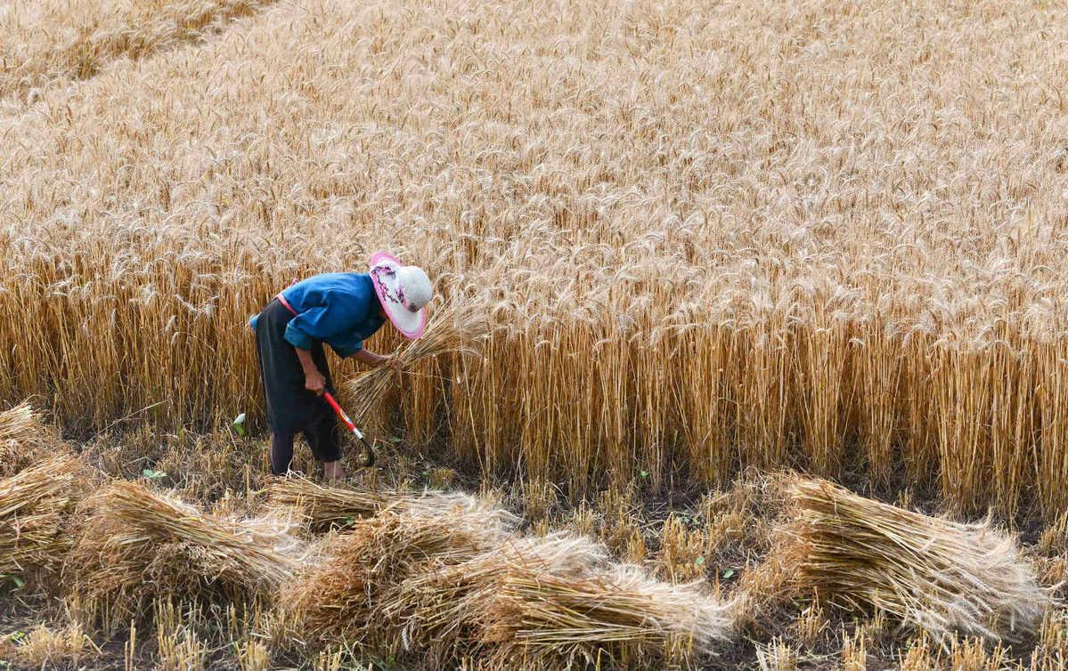 China improves farm produce cold chain facilities