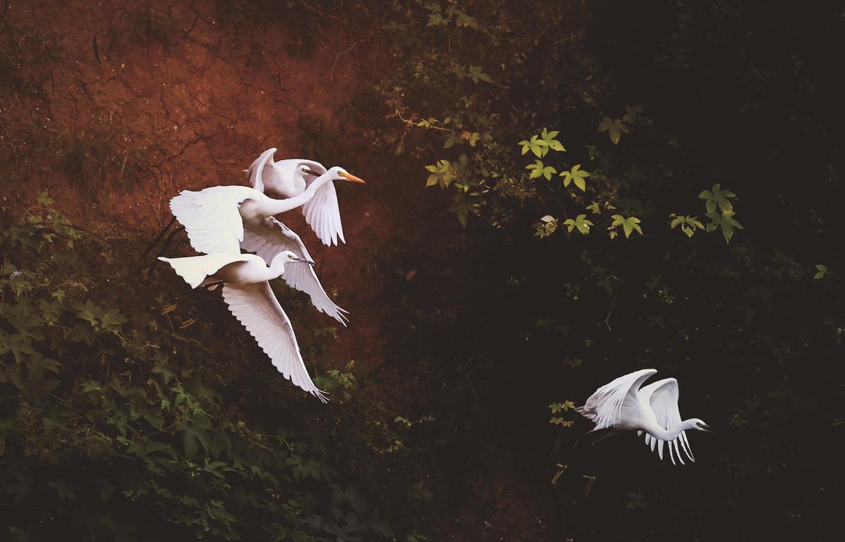Migratory birds arrive in wetlands of Shandong