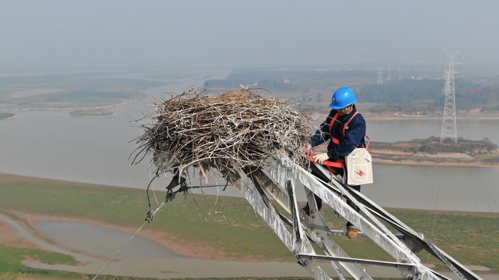 Protecting an endangered species in Poyang Lake