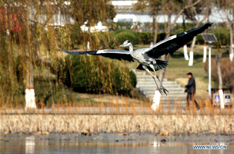 Handan City improves ecological environment across drainage basin of Fuyang River