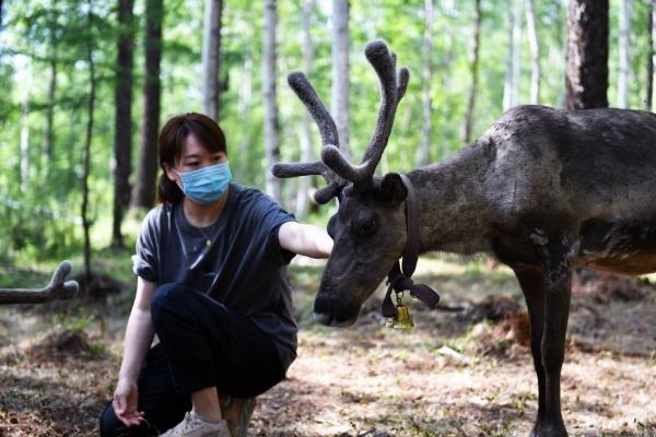 Reindeer bring fun, fortune to Inner Mongolia herders