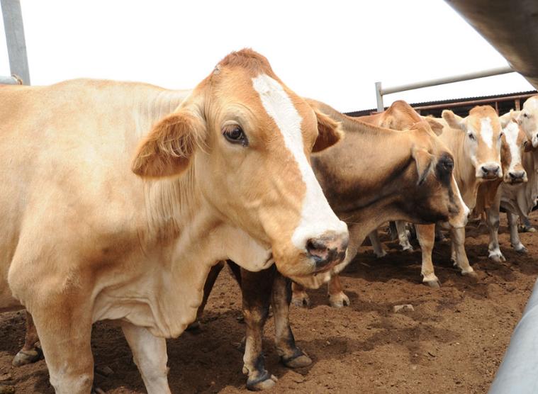 Botswana to export beef to China annually