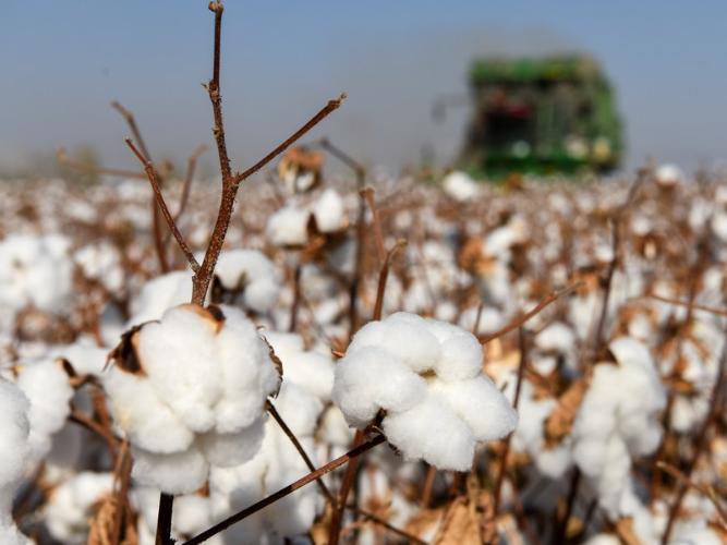 Factbox: Progress on cotton planting, harvesting in China's Xinjiang