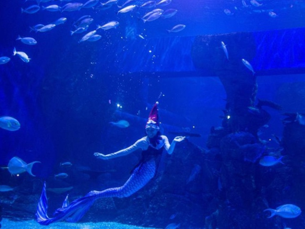Divers wearing costumes with Christmas decorations perform under water in Indonesia