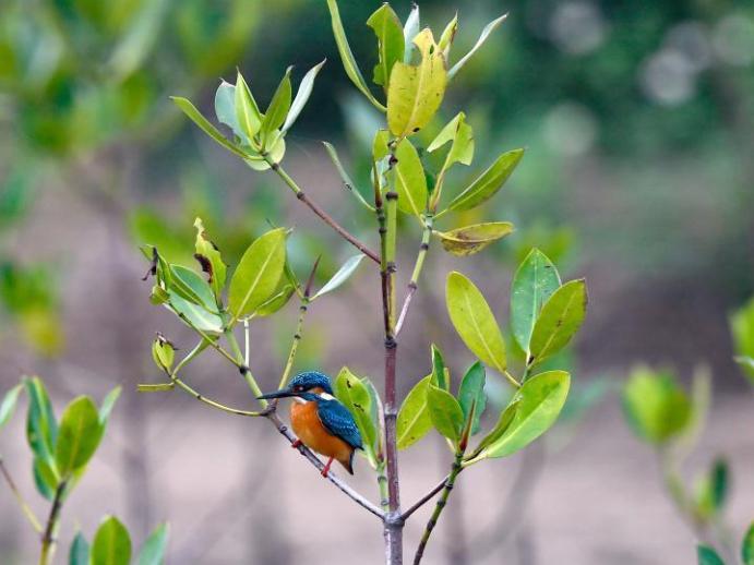 Dongzhaigang wetland ecological rehabilitation project accomplished