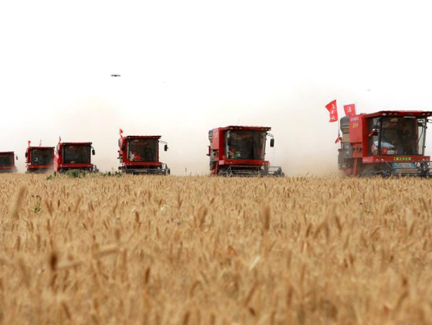 China's agricultural trade volume increased by 8.2% in January-November period