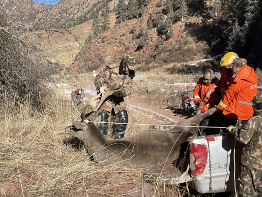 Endangered deer rescued in NW China's Qilian Mountains
