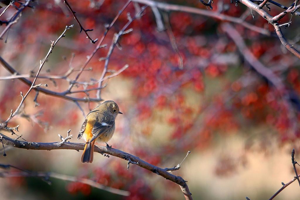 City of Wild: Pretty birds near Yongding River in Beijing