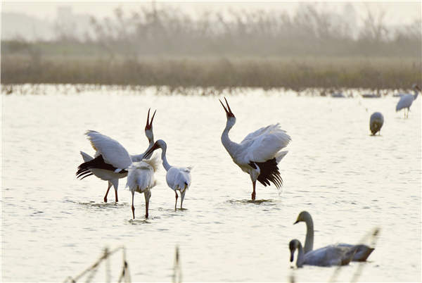 Uncollected harvest helps waterfowl to survive