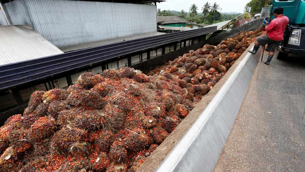 US bans palm oil imports from second Malaysian firm