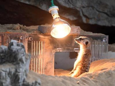 In pics: animals at Chongqing Zoo