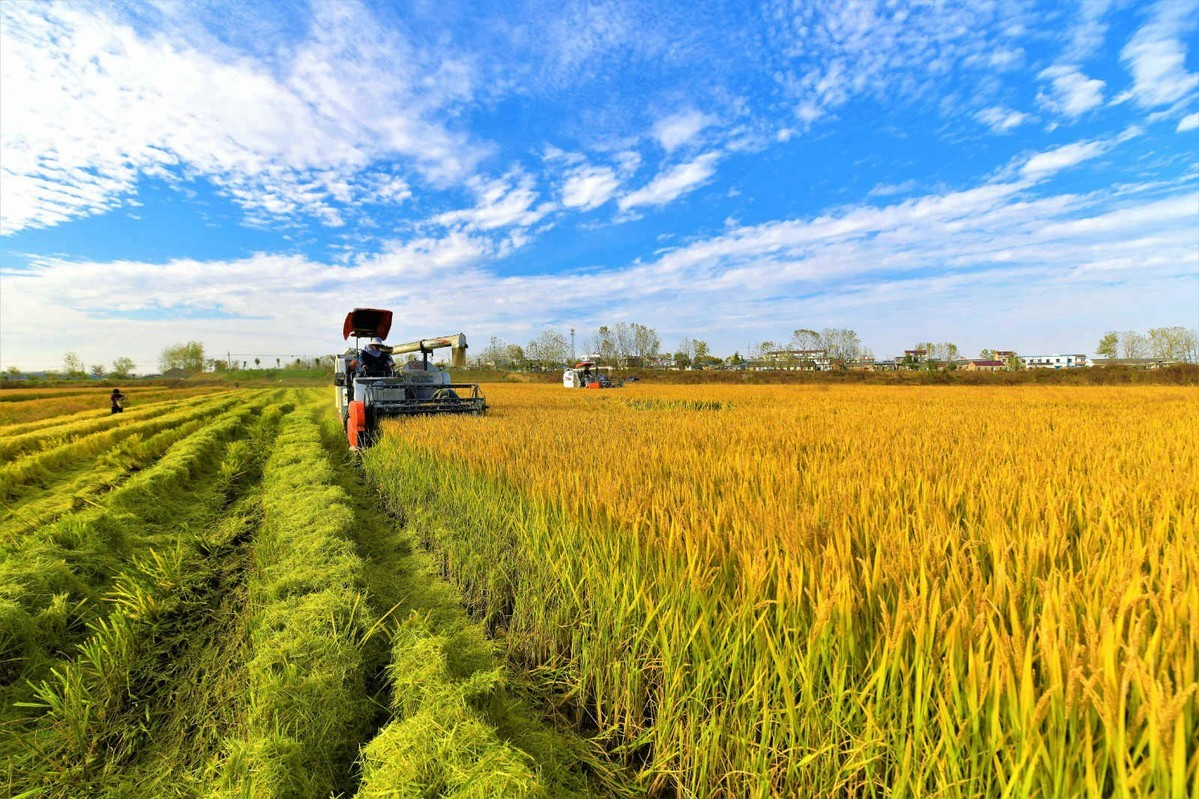 CPPCC agriculture committee innovates to address farm-related problems