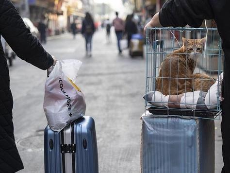 China takes necessary precautions for Spring Festival travel rush