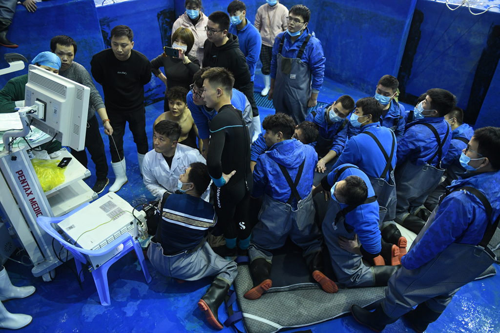 Surgeons team up with veterinarians to save superstar dolphin in East China's Fuyan
