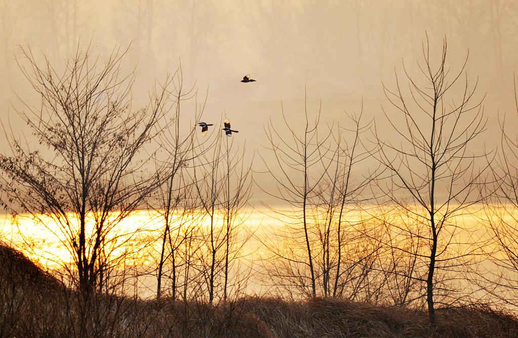 Wetland wonders at dusk in E China