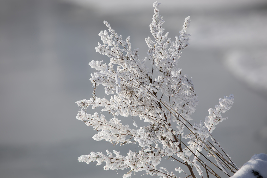 Enjoy the rime at the coldest time in NE China