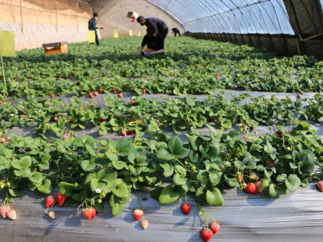China's Shandong sees record agricultural produce exports in 2020