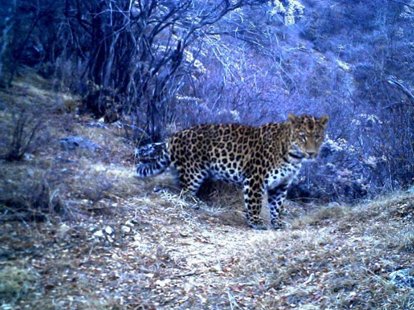 Wild animals frequently spotted along a river valley in Tibet, indicating improving biodiversity