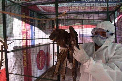 Indian gov't confirms outbreak of bird flu