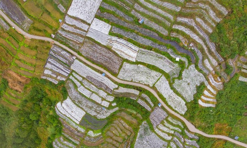 Tibet's lawmakers pass comprehensive regulation on ecology protection