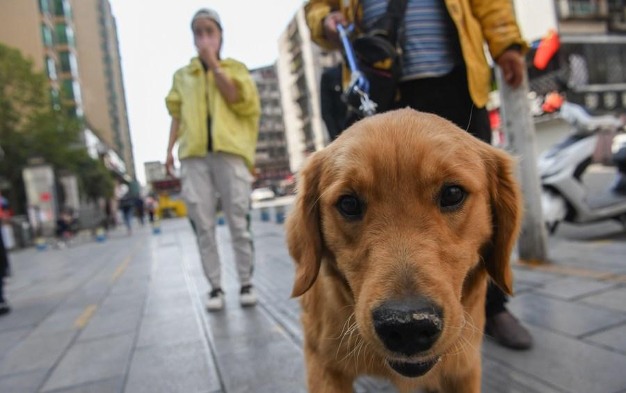 Pets allowed at quarantine sites in Shanghai