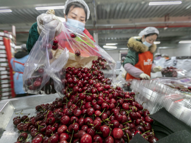 Price of imported cherries sees fluctuations in China