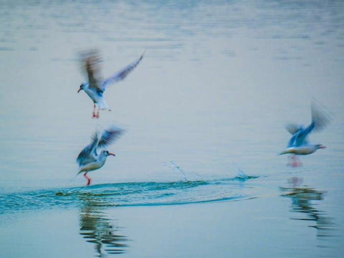 Migratory birds seen at East Lake in Central China's Wuhan